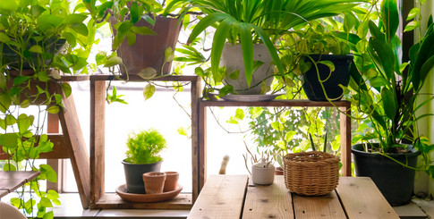 Kunstplanten flash sale